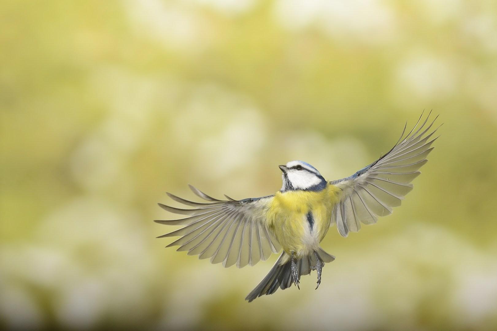 Les oiseaux en vol