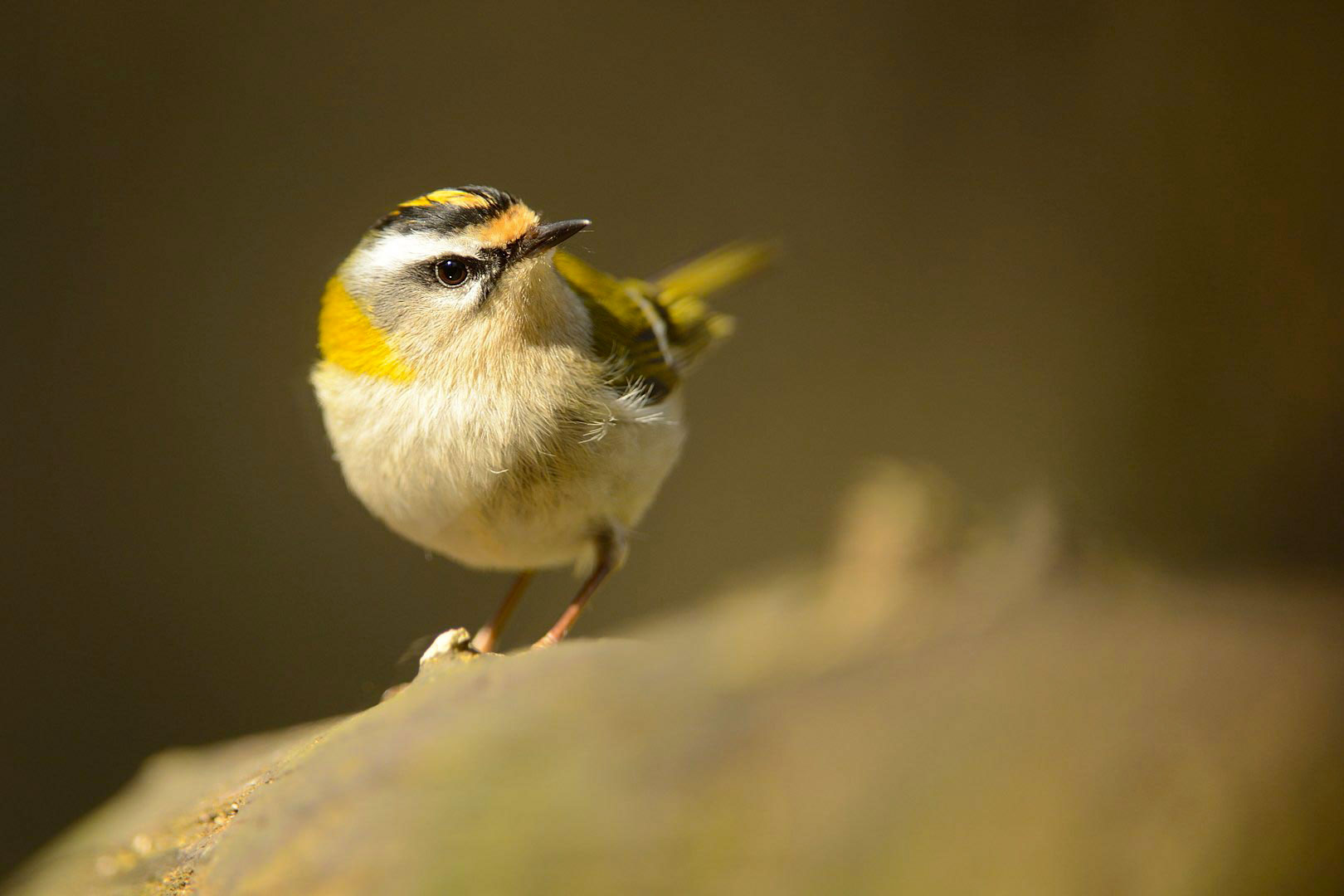 Les oiseaux tu Tal